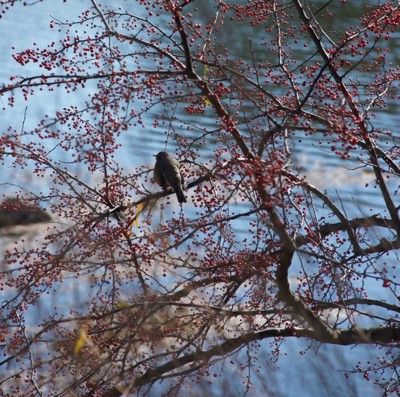 Look for Unusual Signs of Spring